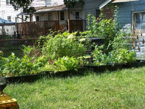 garden-august-08-015