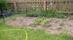 garden august 11 001
