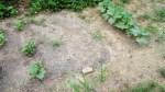 garden august 11 003