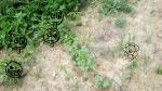 garden august 11 006