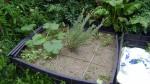 garden august 11 007