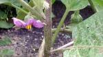 garden august 11 015