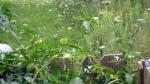 garden august 11 017